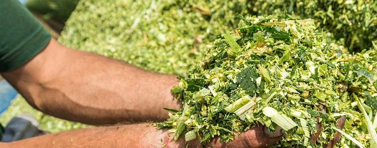 Измельченная трава